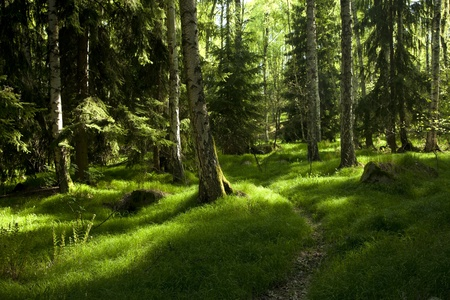 The primeval forest with grass on ground Stock Photo
