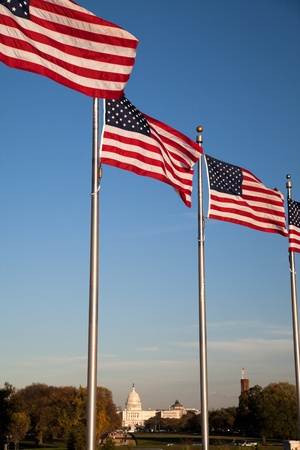us government: The US Capitol and US Flags in Washington D.C. Stock Photo