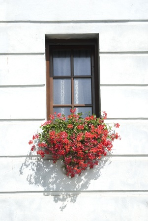 The ancient window w geranium flowers
