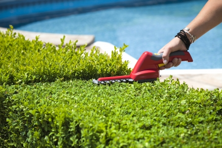 The person cuts the hedge by the Hedge trimmer