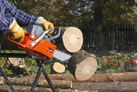 tree trimming: The chainsaw cutts the log of wood