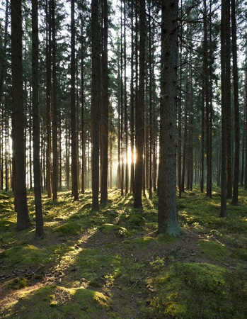 The forest in the morning sunshine photo