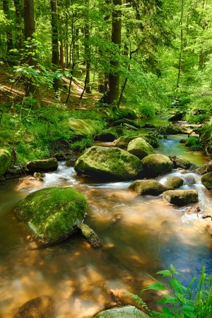 The river runs over boulders in the primeval forest - HDR