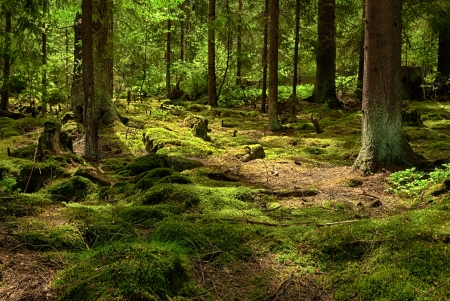 La selva virgen con Mossed tierra HDR