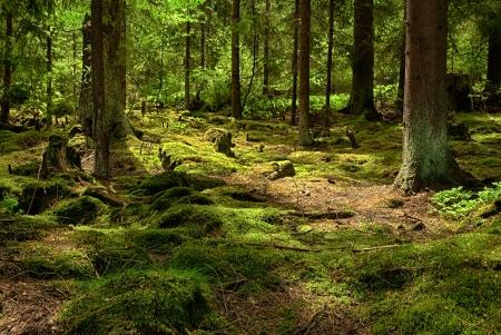 Mossed 地上 HDR と原生林 写真素材