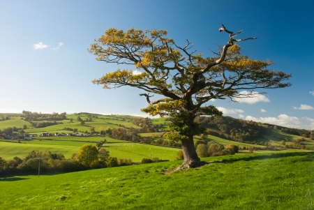 The English tree stand alone in the countryside photo