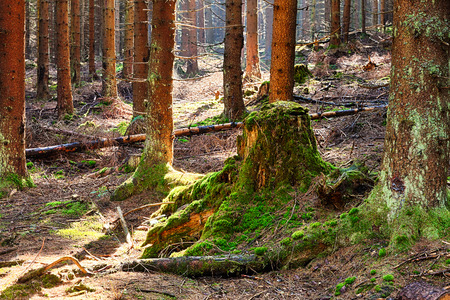 decomposition: The primeval forest with mossed ground