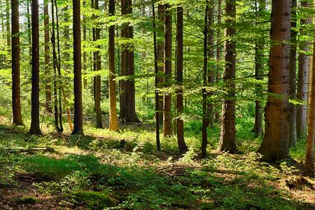 ecosistema: El bosque primitivo con hierba en terreno