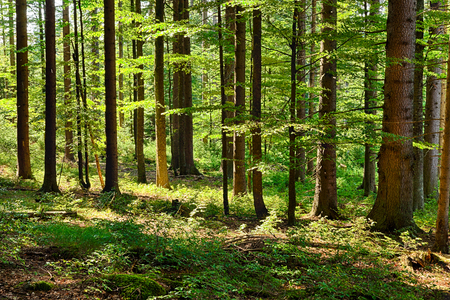 ecosystems: The primeval forest with grass on ground Stock Photo