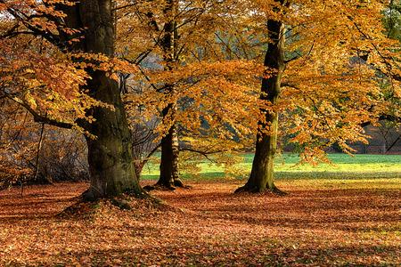 arboles frondosos: El bosque de hoja en el sol de la mañana