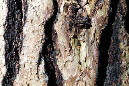 cleavage: Old wood bark texture with the cleavage Stock Photo