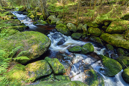 River runs over boulders in the primeval forest Stock Photo