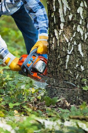 The lumberjack cutting the birch Reklamní fotografie