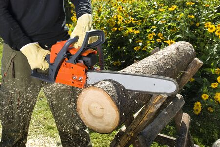 The chainsaw cutts the log of wood
