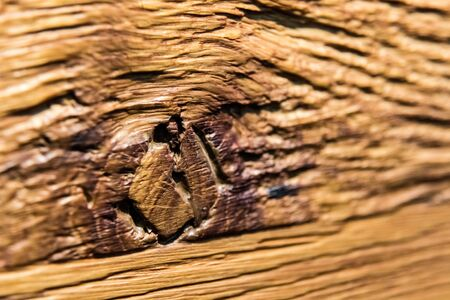 Old wood texture with the woodworm holes
