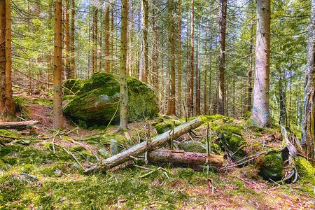 The primeval forest with mossed ground and old branches - HDR Reklamní fotografie - 140122907