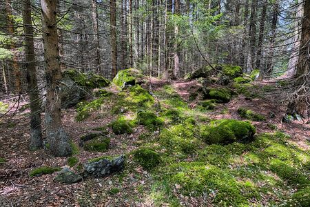 The primeval forest with mossed ground and old branches - HDR Reklamní fotografie - 140189477