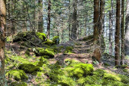 The primeval forest with mossed ground and old branches - HDR Reklamní fotografie - 140189534