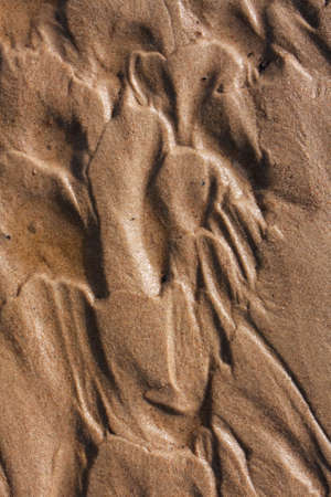 Real image of wet sand on the beach with texture of wave. 版權商用圖片