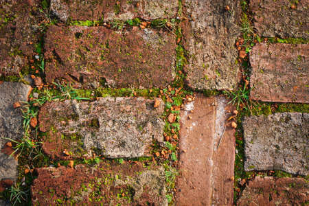 The old red brick is overgrown with moss on the ground. Texture. The view from the top