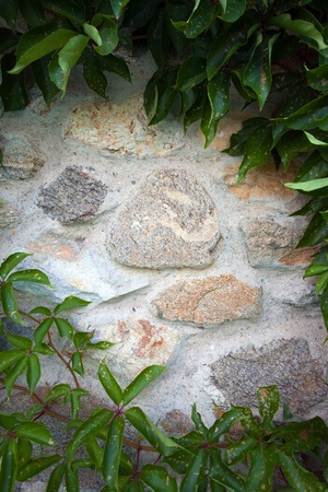 Vegetation over the stone wall with empty space in the center.  photo