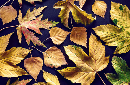 details: Bunch of autumn leaves, abstract composition with view on details.
