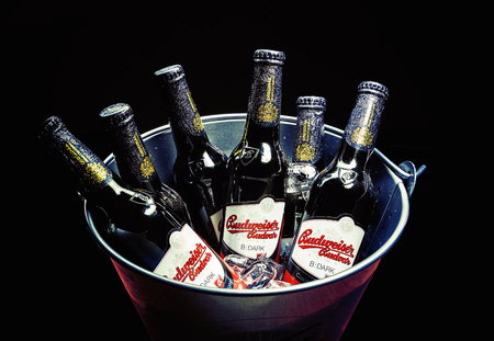 budweiser: Cacak, Serbia - March 30, 2016: Six bottles of Budweiser Dark beer in bucket, served for group of people.