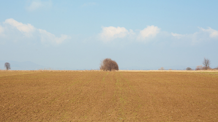 land plant: Late winter season, fields and meadows from Balkan, Serbian countryside.  Stock Photo