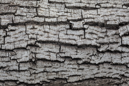 Details of an old wooden texture, tree bark pattern. Фото со стока - 82992864