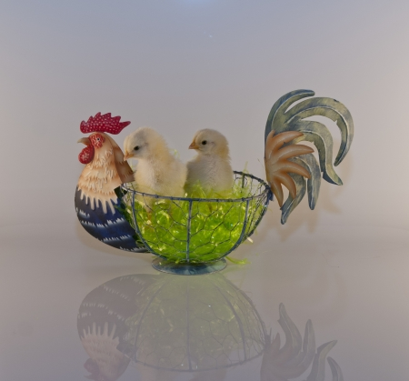 babby: Two Chickadees in Rooster Basket  Stock Photo