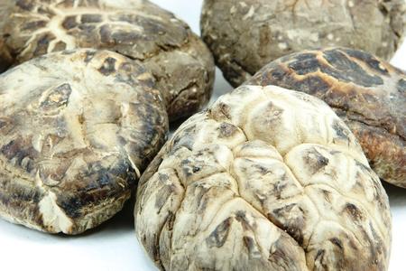 palatable: Shiitake mushrooms Stock Photo