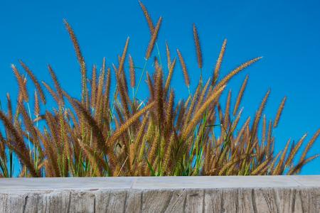 grass flowers: Grass flowers