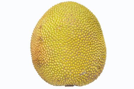 jack fruit: jack fruit