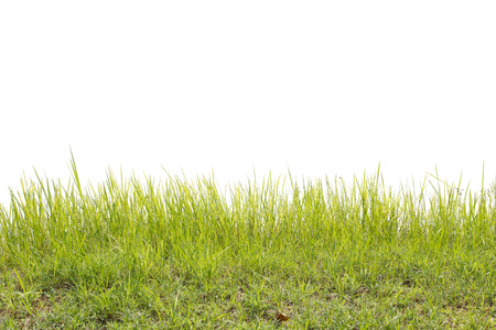 Grass Фото со стока