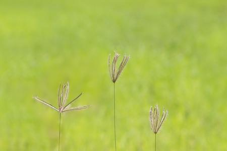 comfortableness: Grass flower