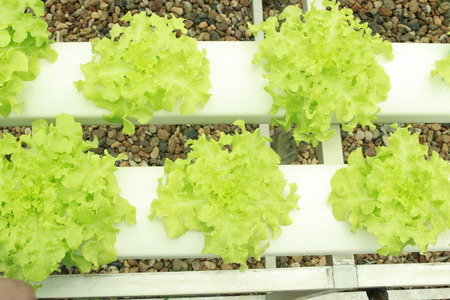 nutrients: Hydroponic Vegetable Nutrients