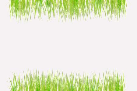 arroz blanco: Marco de la baya del arroz aislado en el fondo blanco.
