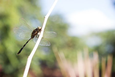 griping: Dragonfly outdoor. Stock Photo