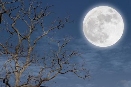 night moon: Romantic. Stock Photo