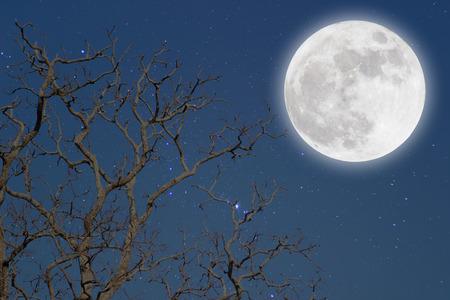 arboles secos: Luna llena con árboles muertos. Foto de archivo