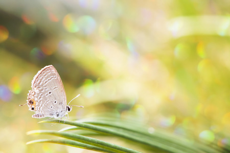 glister: Butterfly in spring. Stock Photo