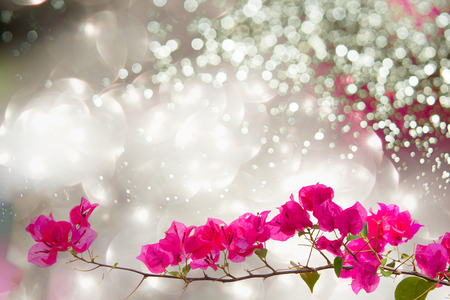 bougainvilleas: bougainvilleas on vivid background. Stock Photo