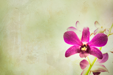 day spa decor orchid flower with vintage background: day orchid decor