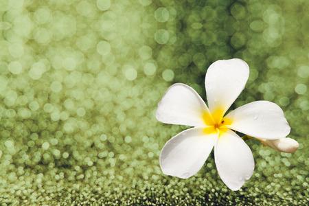 glister: white Plumeria