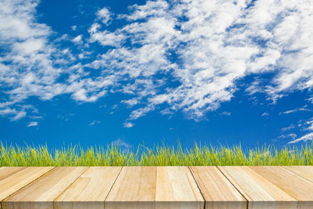 wood grass: Beautiful blue  sky with wood. Stock Photo