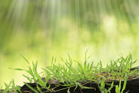 exaltation: Grass with blur background. exaltation concept. Stock Photo