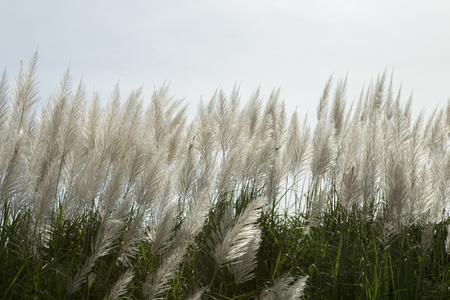 comfortableness: Flowering grass