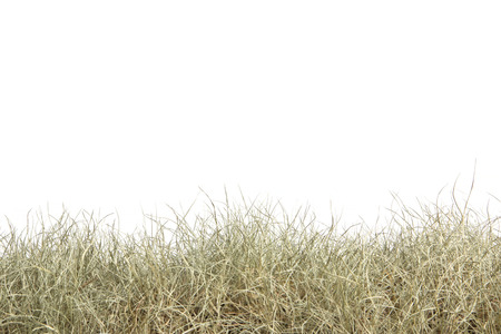 Dried grass isolated on white background.dry grass field. Stock Photo