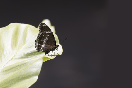 Butterfly in nature with space. Stock Photo