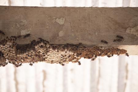 Hymenoptera on wood. Wasp's nest. 版權商用圖片 - 110343370